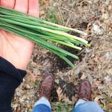 Picking wild green onions.