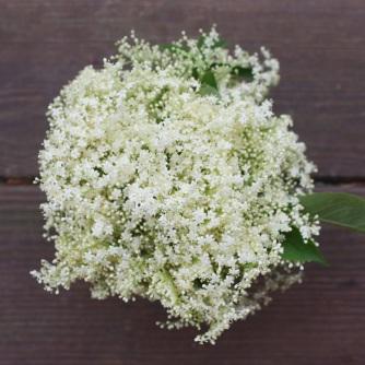 Elderflowers...